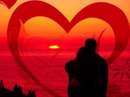tribulus amor