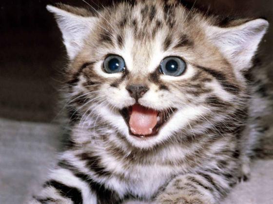 riso - cat