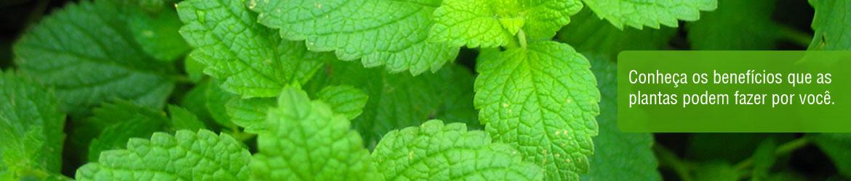 Conhe�a os benef�cios que as plantas podem fazer por voc�.