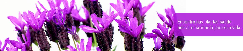 Encontre nas plantas sa�de, beleza e harmonia para sua vida.