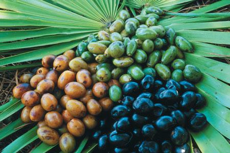 sabal frutos