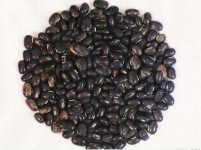 mucuna semente: Está na atualidade