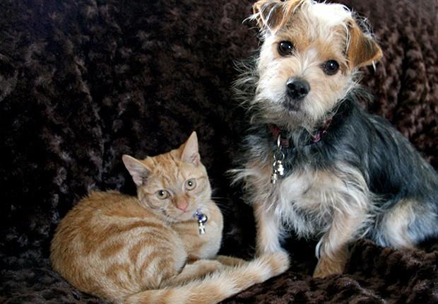 animais de estimacao