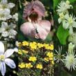 Ess�ncias Florais Bach